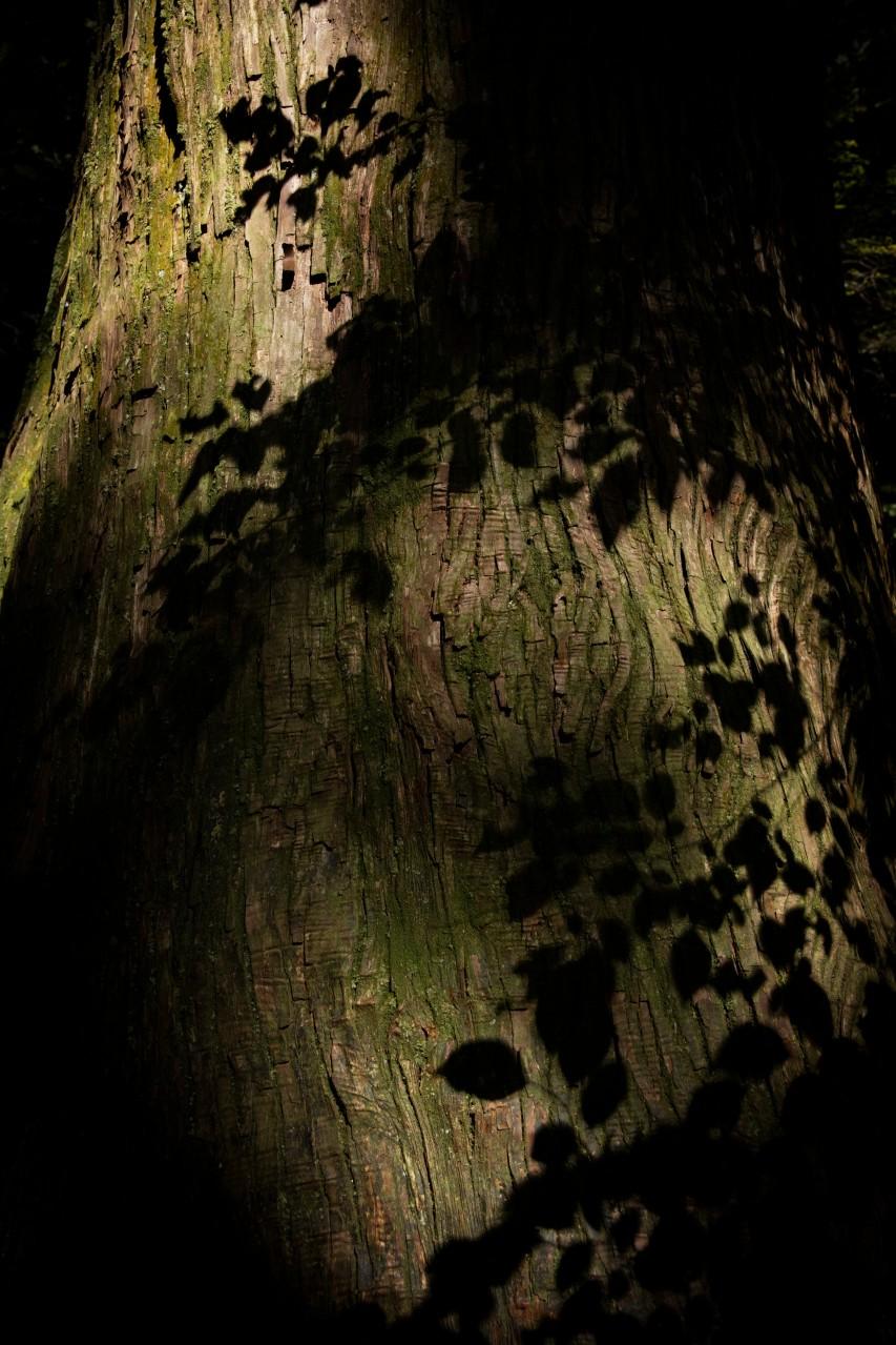 光と影の世界 EOS R5 003
