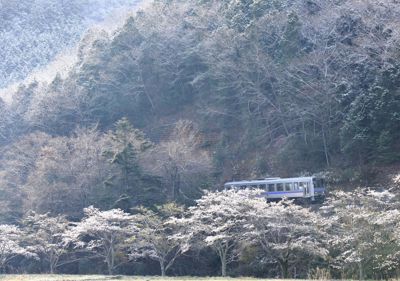 雪と桜と福塩線
