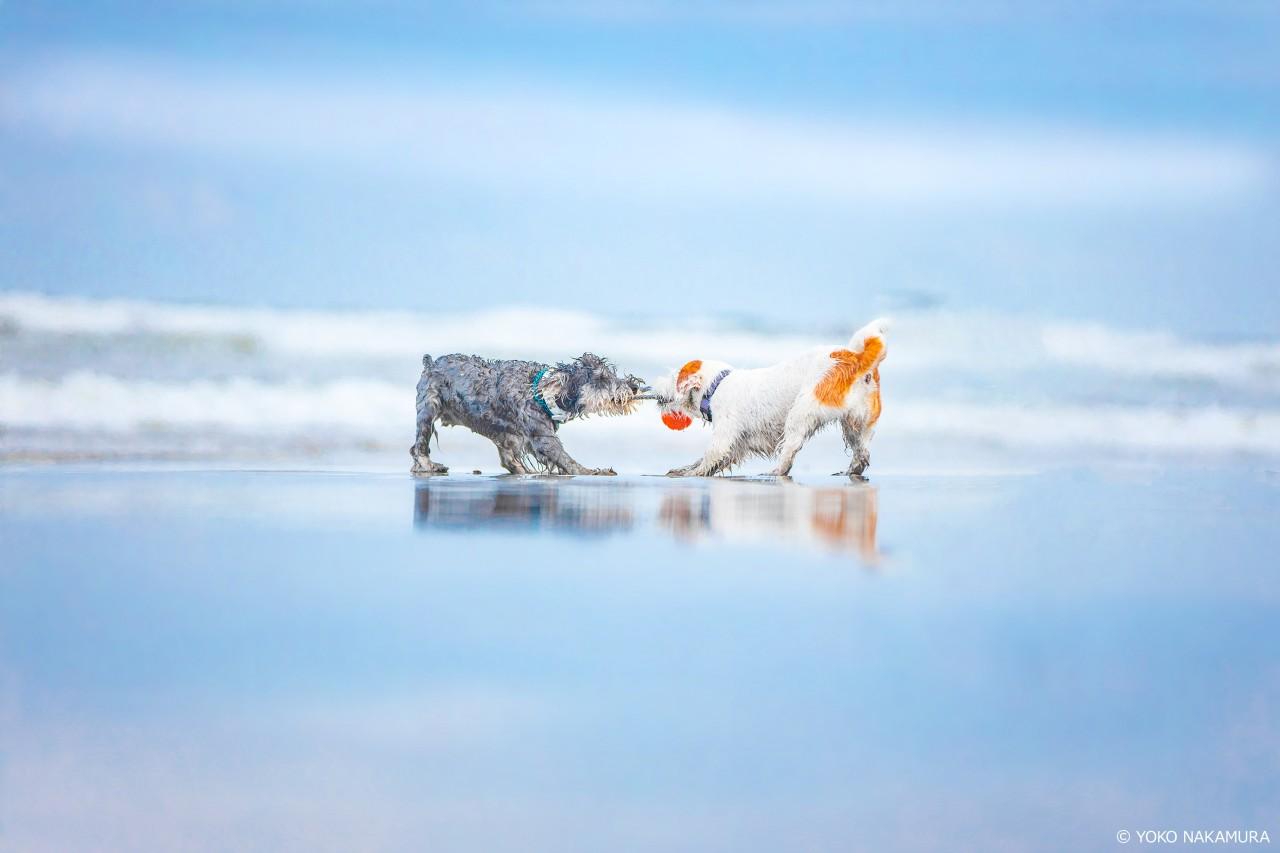 遊ぶ犬たちの「リフレクション」を撮ろう