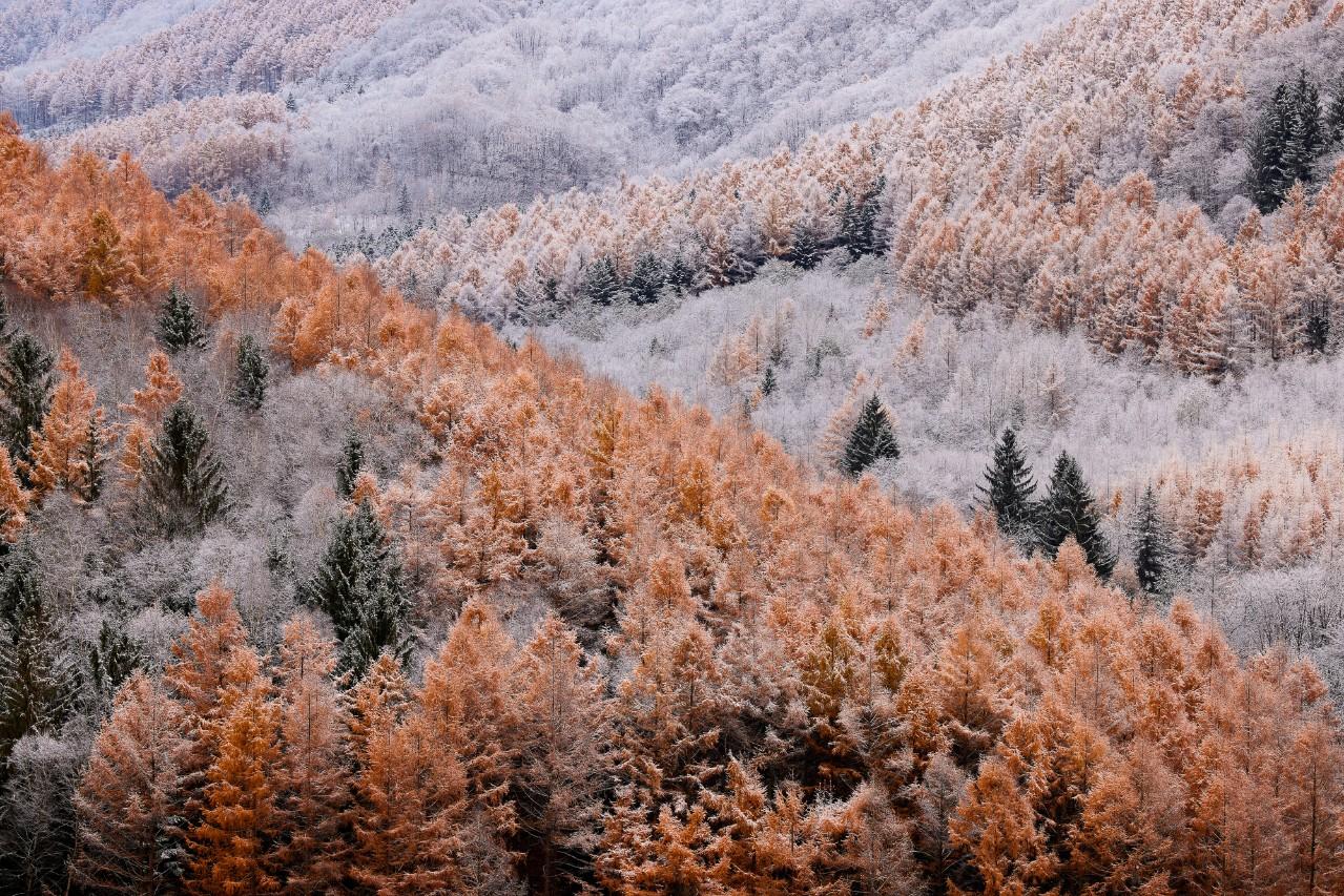 秋と冬を同時に描く